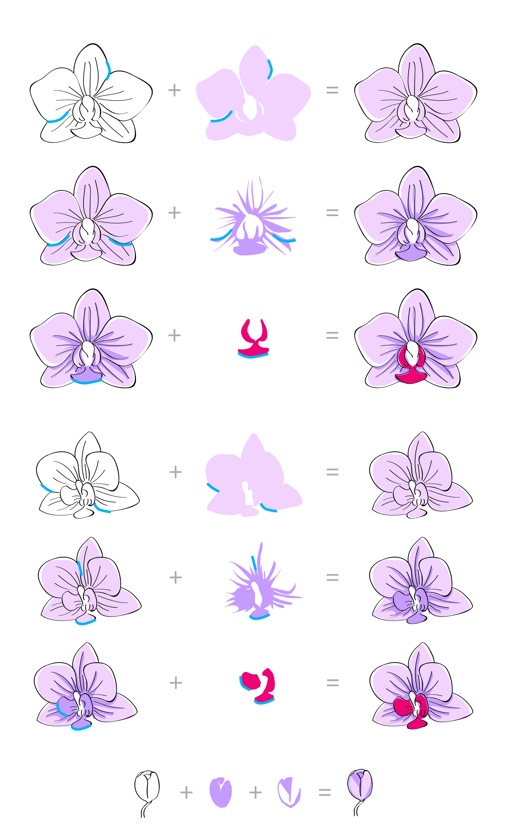 Download Oriental Orchid Layering Guide 1